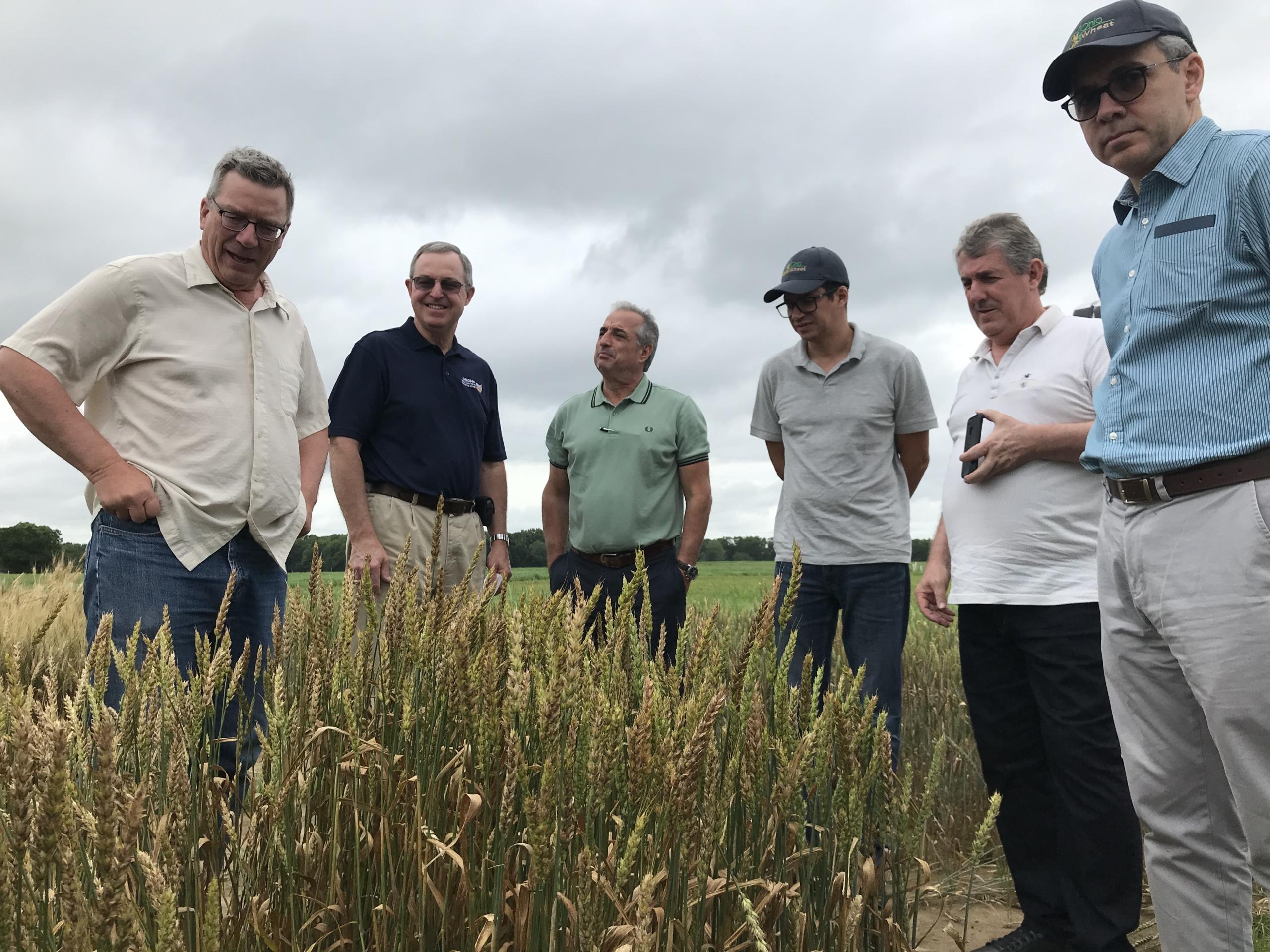 Ohio's public wheat breeding program