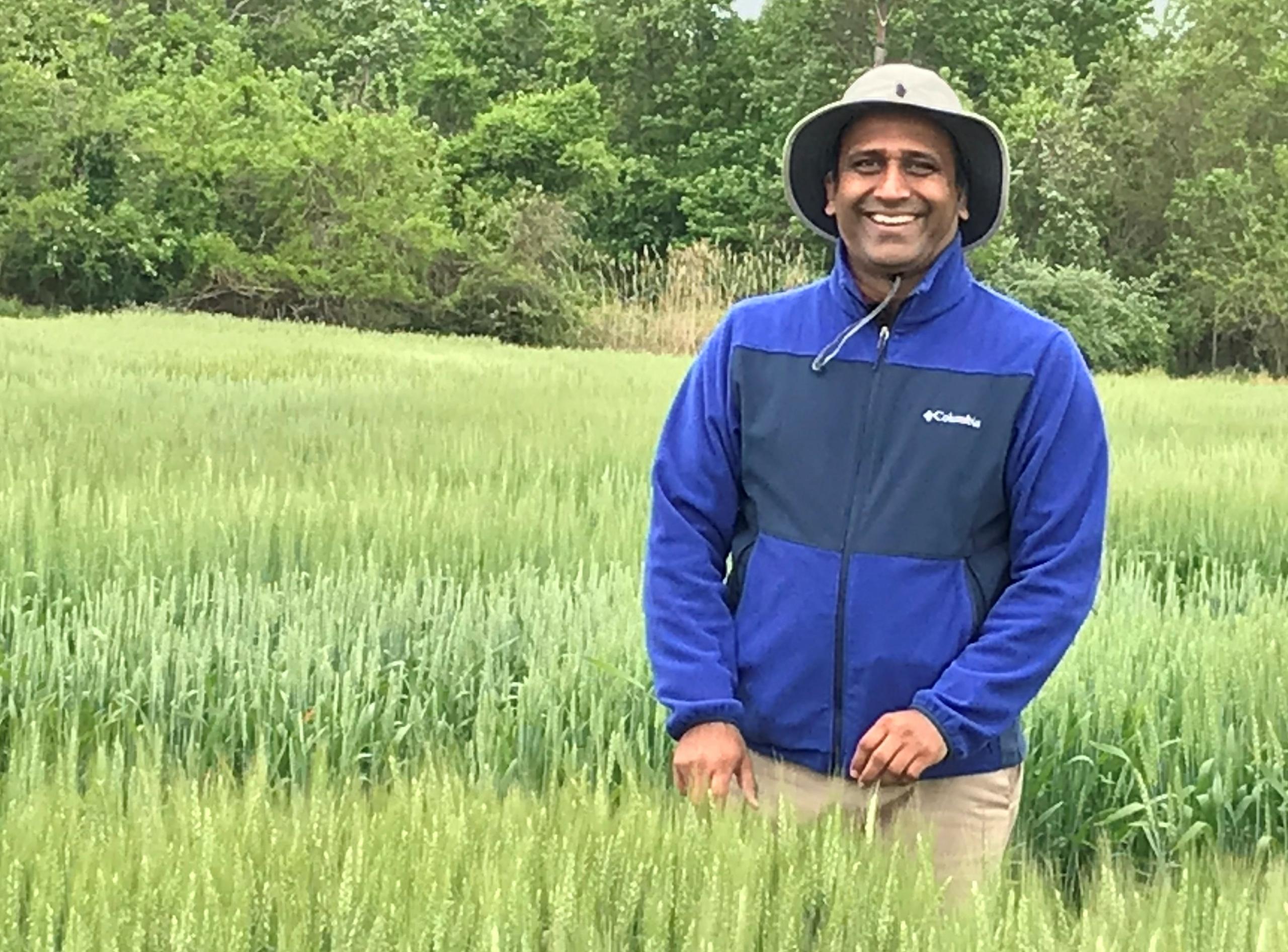 Dr. Vijay Tawari - Maryland's public wheat breeding program