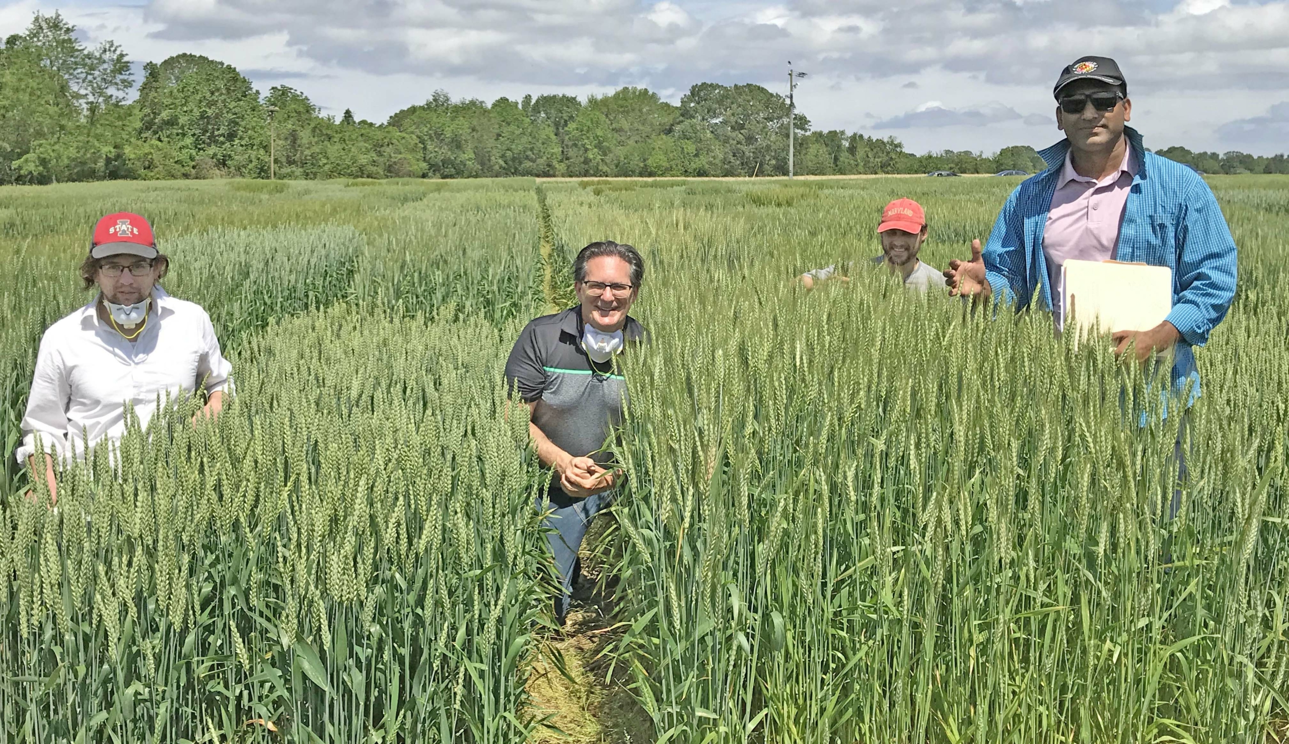 Maryland's public wheat breeding program