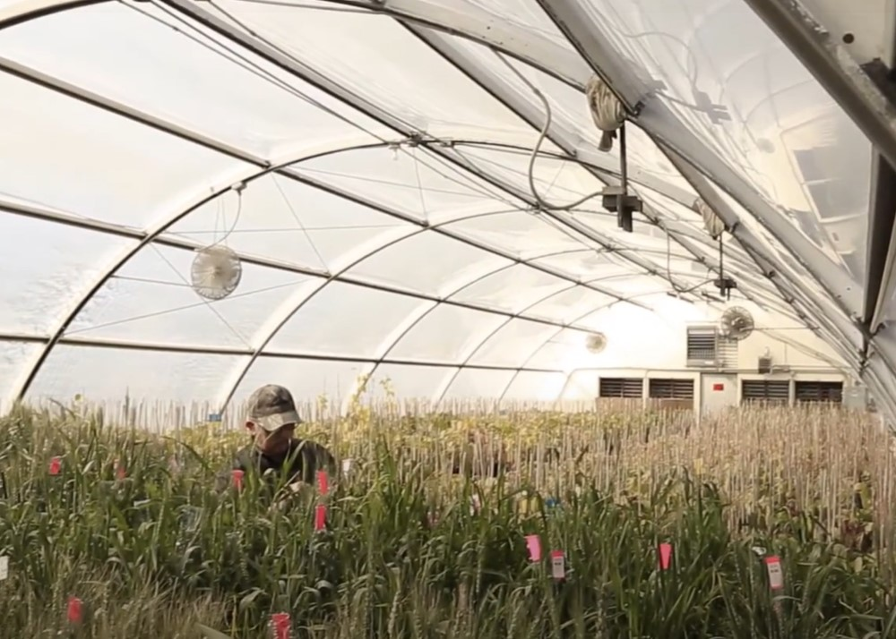 Shows work inside the Wheat Technology Center in Twin Falls, Idaho